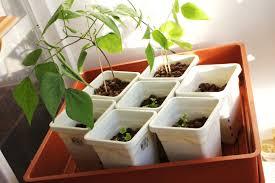add water u0026 grow u2013 my hydroponic herb garden project dirt on my