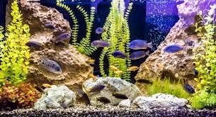 Zombie Aquarium Decorations Toxic Aquarium Water U0026 Fish Poisoning