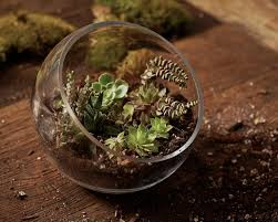 gardening 101 how to plant an open terrarium gardenista