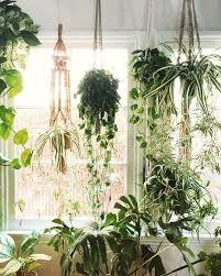 best 25 indoor plant hangers ideas on pinterest macrame plant