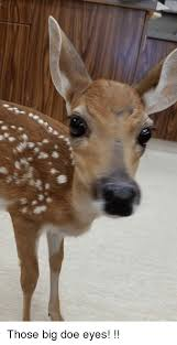 Doe Memes - those big doe eyes doe meme on me me