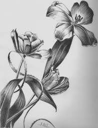 pencil sketches of flowers images tag easy pencil shading drawings