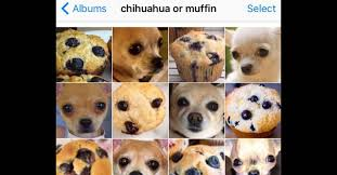 Kittens Memes - this woman created her own viral meme with puppy or bagel smosh