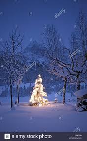 winter landscape christmas tree illuminates outside evening