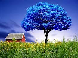imagenes con flores azules dia de la maestra azul blue wallpaper de arbol azul imagen de arbol azul foto de