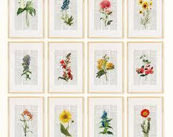 pressed flowers pressed flower etsy
