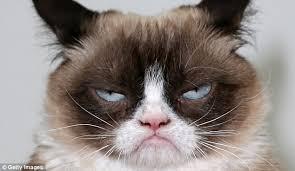 Meme Generator Grumpy Cat - grumpy cat blank template imgflip