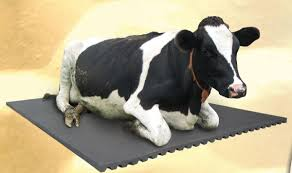 top 5 cow mats reviewed because of benefits they are a must