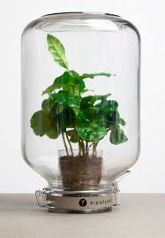 self watering plants pikaplant creates self watering systems for automatic plant