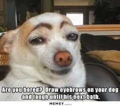Dog Teeth Meme - dog memes funny dog pictures memey com page 2