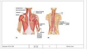 introduction to human anatomy and physiology 6 the muscular
