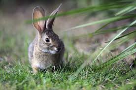 rabbits compassion farming