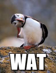 Puffin Meme - wat confused puffin meme on memegen