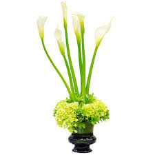 white calla lilies fresh bulk white calla flower stems 1 38 to 1 43 per stem