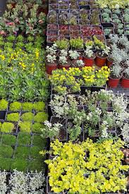 decorative green plants and seedlings nursery garden stock photo