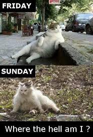 Sunday Meme - sunday memes