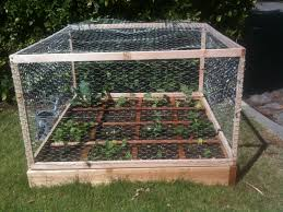 ingenious inspiration garden cages lovely ideas steel fruit and