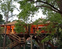 tree house stay thekkady forest resort jungle house thekkady