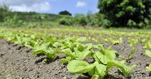 lancement des parcours de compétences en agriculture sur le actualités archives page 10 sur 15 agriculture nc