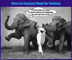 Elephant Meme - what an elephant might be thinking imgflip