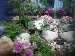 converting an aquarium into a terrarium thriftyfun