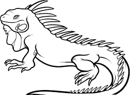 iguana coloring pages getcoloringpages com