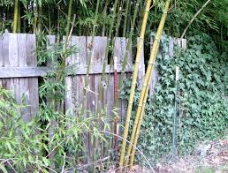 Bamboo Backyard How To Make A Bamboo Calligraphy Nib Pen Fiction