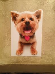 dog christmas cards ideas birthday ideas dog cards blank dog