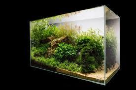 Aquascape Com Aquascape U2013 Basic Principles And Elements Of Landscaping Under Water
