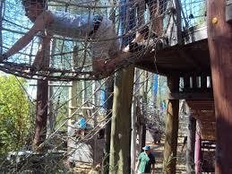 cool tree houses i built a tree house fo4 httpi imgur comkgyvvod jpg idolza