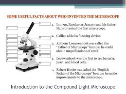 compound light microscope facts ppt introduction to the compound light microscope powerpoint
