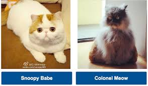 Colonel Meow Memes - march meowdness round 1 snoopy babe vs colonel meow cats vs cancer