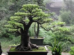 some inspiring images of beautiful small trees for landscaping
