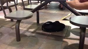 mice attack markville mall food court