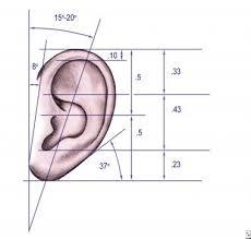 Basic Anatomy Of The Ear Microtia Problem Epidemiology Etiology