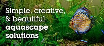 Aquascape Aquarium Set Up Ten Reasons To Aquascape With Artificial Plants