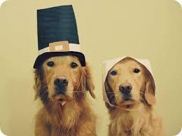 jazz 23 pets who are not enjoying thanksgiving the blaze