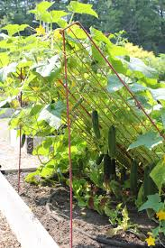 cucumber trellis large powder coated steel gardener u0027s supply