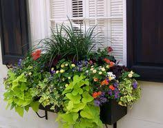 Flowers For Window Boxes Partial Shade - summer window box ideas shades shutters blinds garden window