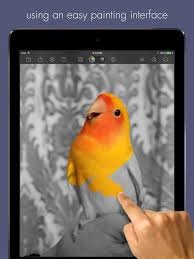 color splash for ipad on the app store