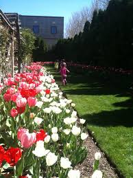 thanksgiving point tulip festival during april in lehi is one of