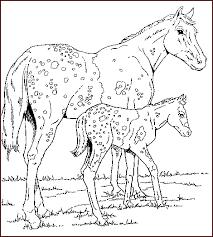 coloriage cheval chevaux 3 à colorier allofamille