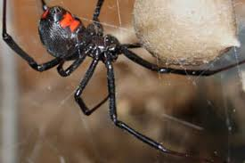 How To Keep Spiders Out Of Your Bed Spiders How To Kill And Get Rid Of Spiders