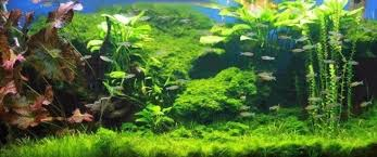 Aquascape Environmental How To Grow Aquarium Plants Planning Setup And Supplies