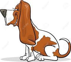 basset hound puppy stock photos royalty free basset hound puppy