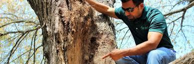 tree service lawrenceville alpharetta tree removal ga suwanee
