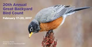 the great backyard bird count audubon vermont