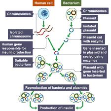 bbc gcse bitesize science biotechnology revision page 5
