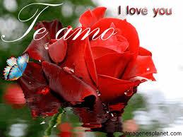 imagenes para enamorar con flores rosas rojas de amor con mensajes lindos ramos de flores para