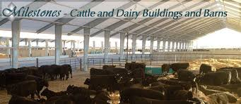 Calf Raising Barns Cattle Fabric Covered Buildings And Dairy Barns Milestones